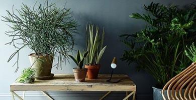 Decoración con plantas y flores
