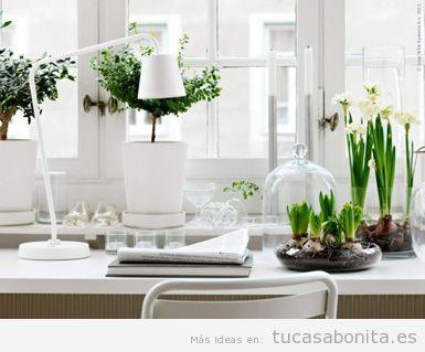 Ideas decorar cocina con cactus