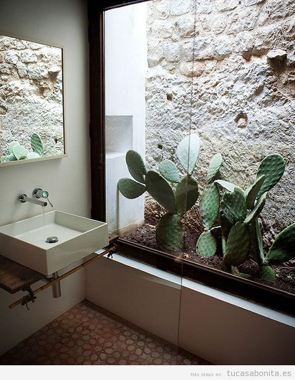 Decorar casa con cactus de interior tu casa bonita for Casa e ideas
