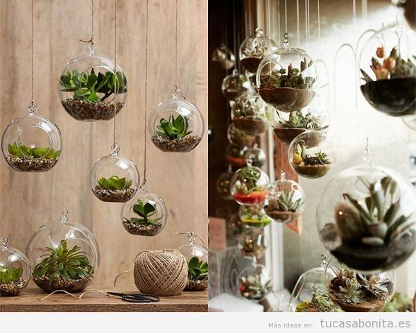 Maneras de decorar una casa con suculentas unas plantas for Como decorar interiores