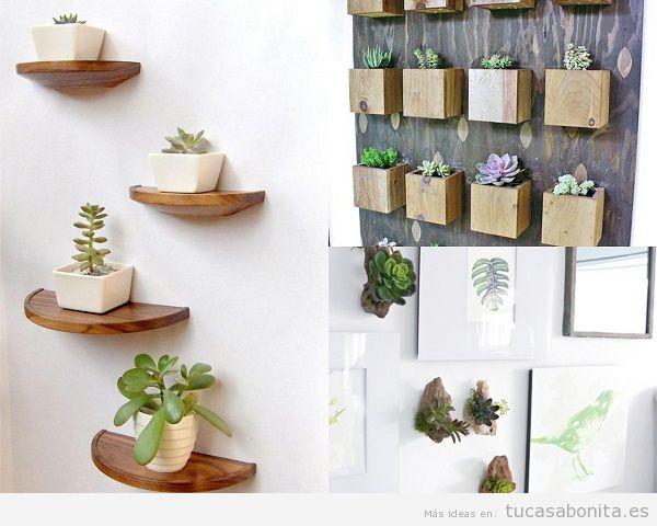 Decorar una casa con plantas suculentas en la pared