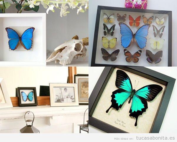 Paredes decoradas con mariposas disecadas y enmarcadas 2