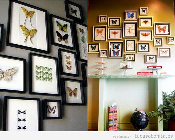 Paredes decoradas con mariposas disecadas y enmarcadas