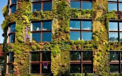 Jardinería vertical: belleza, aislamiento y adecuación al entorno para tu casa