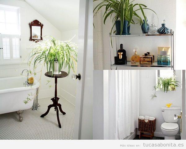 Plantas para el baño, planta araña