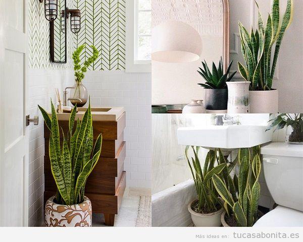 Ideas y trucos para decorar tu casa de estilo moderna o - Plantas en el bano ...