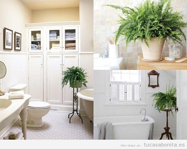 Plantas para el baño, helechos