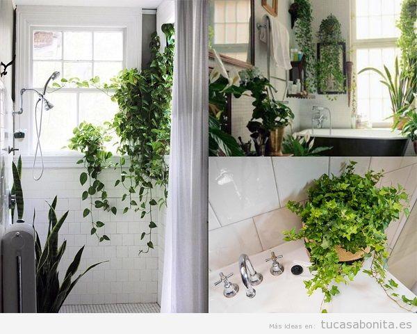 Plantas para el baño, hiedras