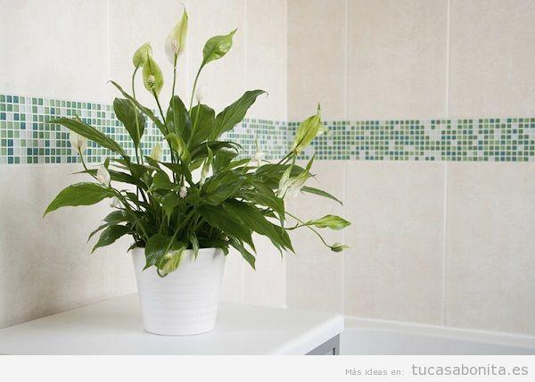Plantas para el baño, lirios de paz