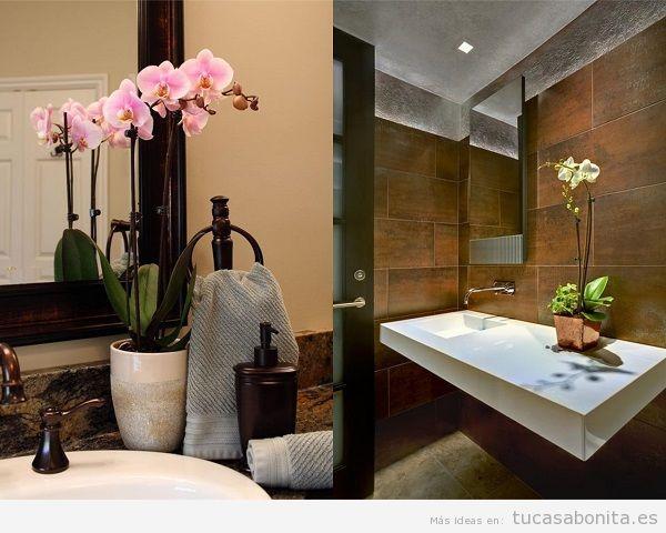 Plantas para el baño, orquídeas
