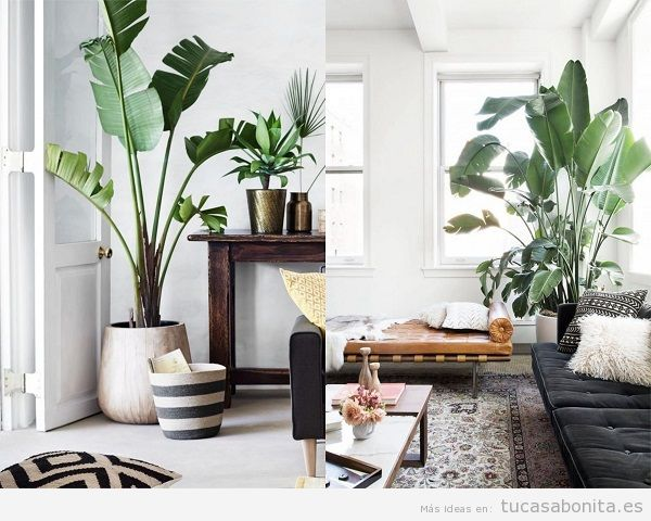 Ideas para decorar un sal n moderno tu casa bonita for Plantas salon decoracion