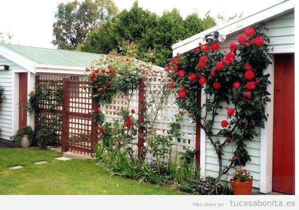 Jardín con rosas en casa 13