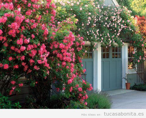 Jardín con rosas en casa 6