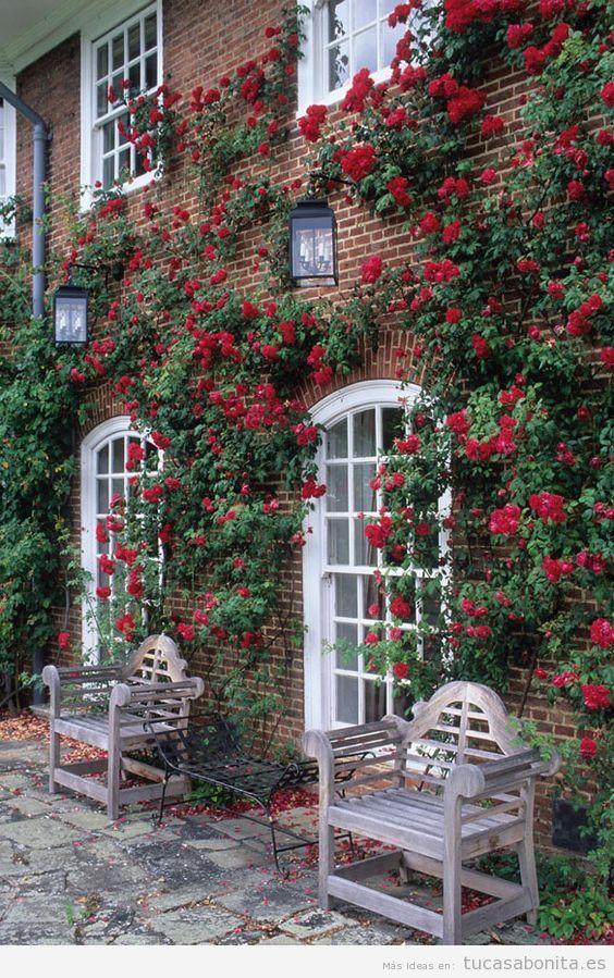Jardín con rosas en casa 8