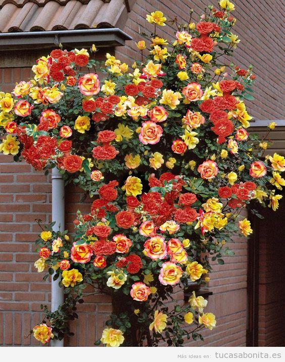 Jardín con rosas en casa 9