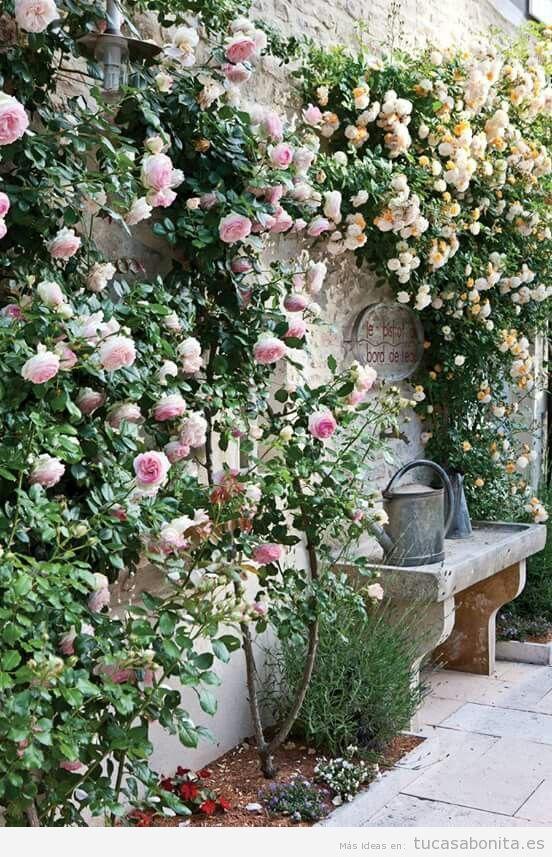 Jardín con rosas en casa 10