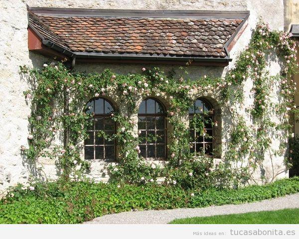 Jardín con rosas en casa 11