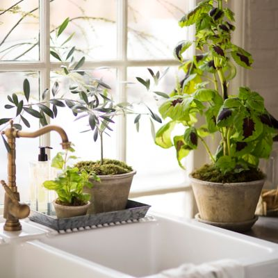 Decoración de sala de cocina con macetas de terracota y cerámica