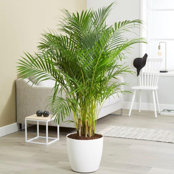 3 Plantas Ideales Para La Sala De Estar Seg 250 N El Feng Shui