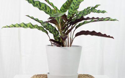 Plantas tropicales para decorar la casa