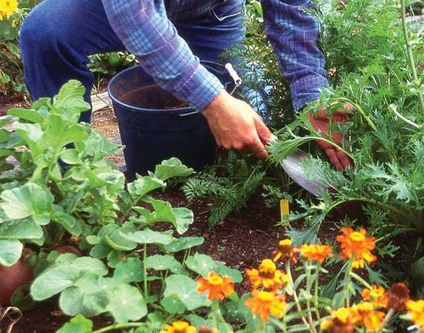 Control malas hierbas
