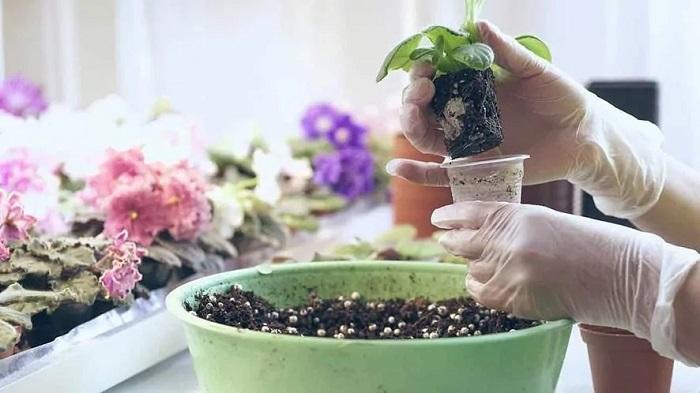 Consejos cuidar plantas de interior en verano, abonarlas