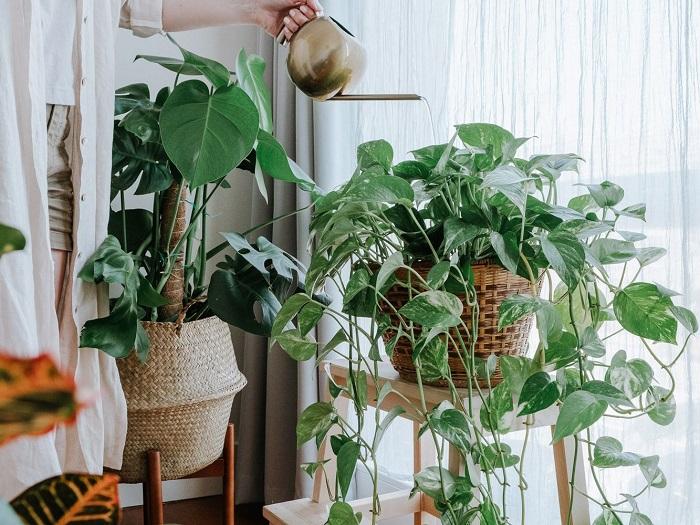 Consejos cuidar plantas de interior en verano, alejarlas del sol