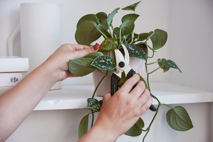 Consejos cuidar plantas de interior en verano, podarlas