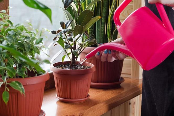 Consejos cuidar plantas de interior en verano, regarlas