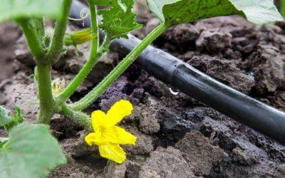 Elige el mejor sistema de riego para tu jardín