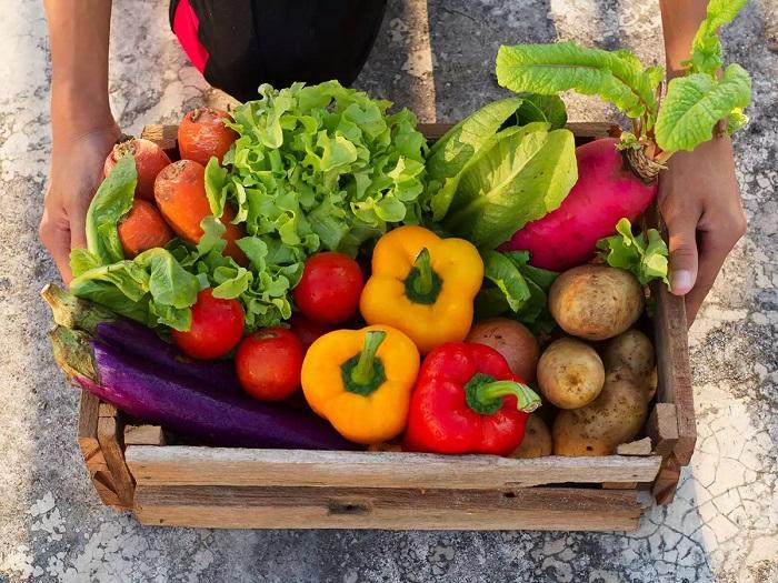Hortalizas que se pueden cultivar en un huerto en casa